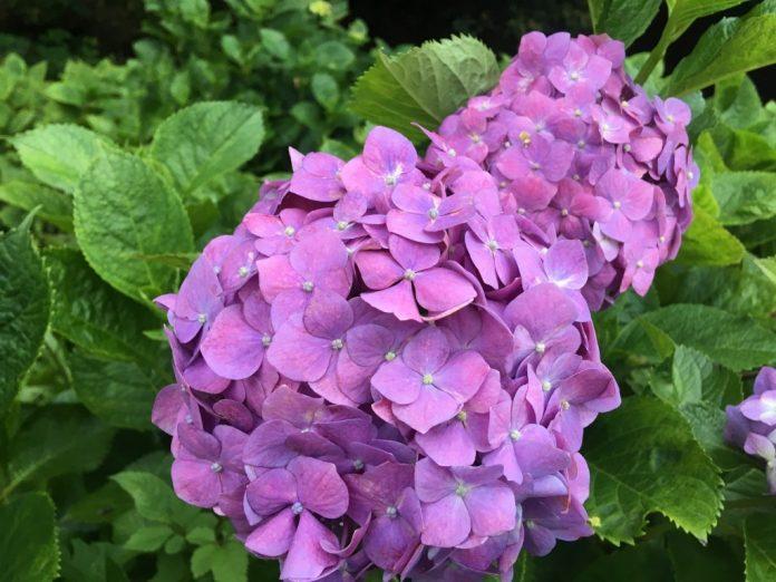 Bunga, Kebudayaan Jepang, Bunga Indah
